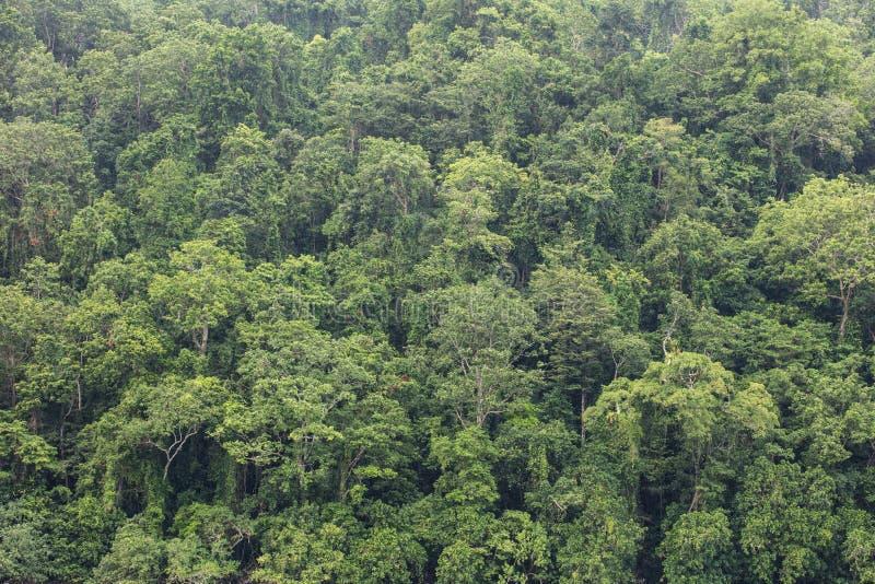Antenne van Regenwoud in Papoea-Nieuw-Guinea royalty-vrije stock afbeelding