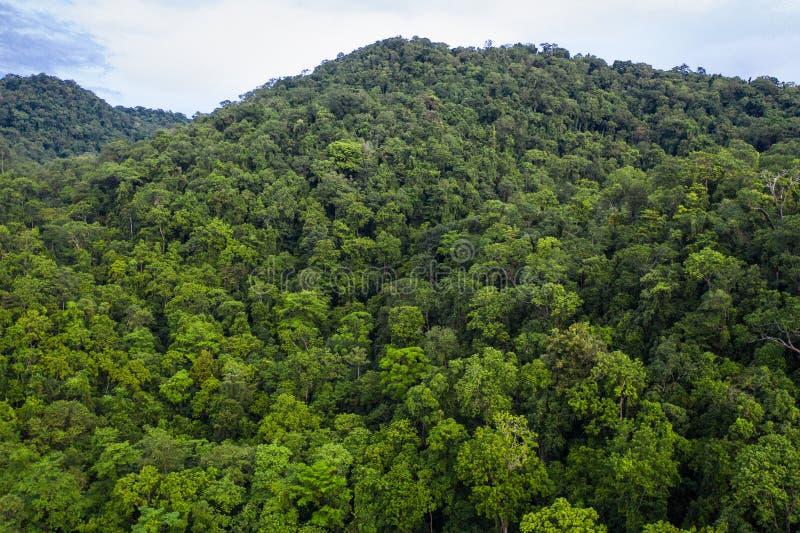 Antenne van Regenwoud in Papoea-Nieuw-Guinea royalty-vrije stock foto's