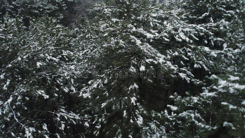 Antenne voor sneeuw behandelde nette bomen in de schilderachtige Canadese wildernis schot Adembenemende mening van eindeloze pijn royalty-vrije stock foto
