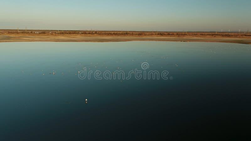 Antenne voor troep van eenden bij gouden zonsondergang over de donkerblauwe rivier schot Licht van de avondhemel met troepen van royalty-vrije stock fotografie