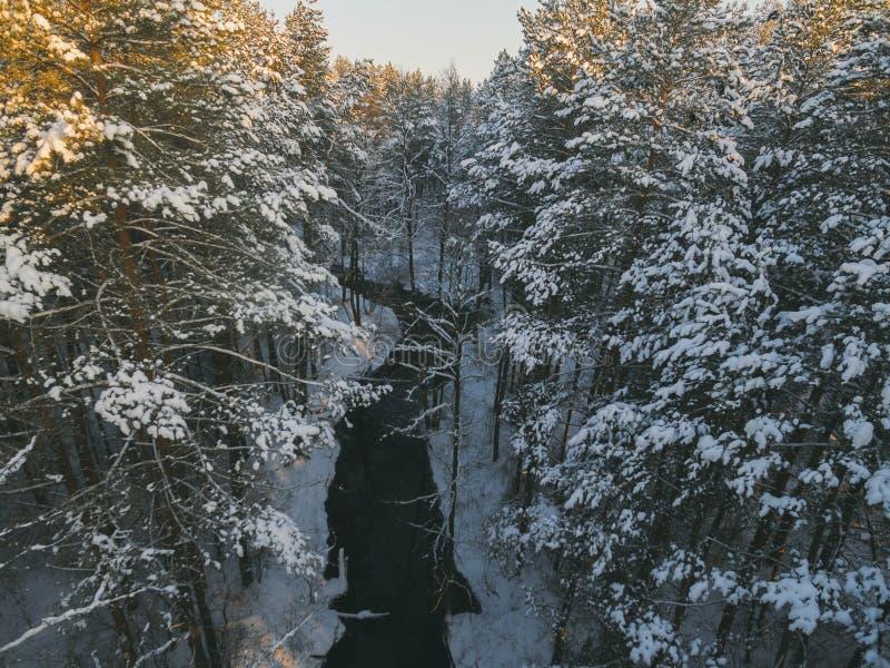 Antennen besk?dar av skogfloden i tid av vinterdagen fotografering för bildbyråer