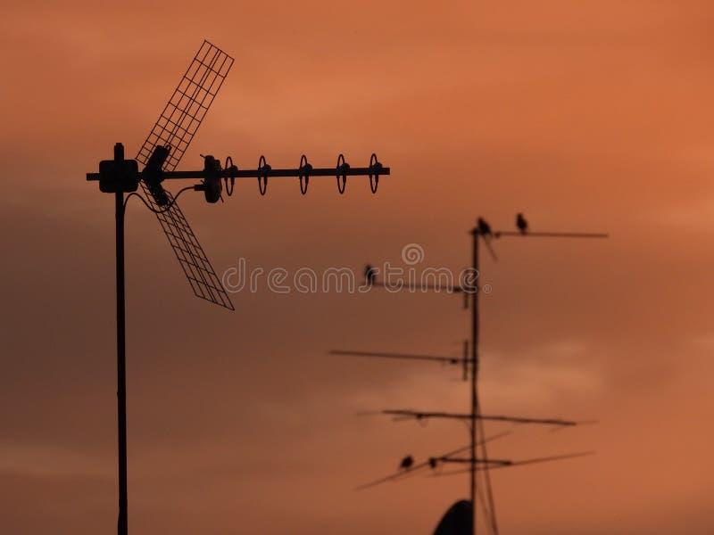 Antennes de TV photographie stock libre de droits