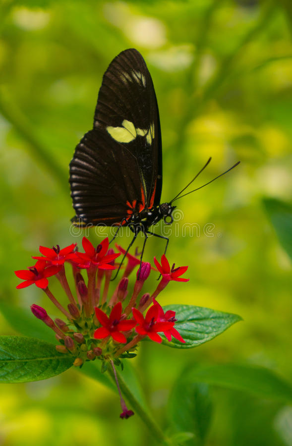 Antennes et buse de papillon photos libres de droits