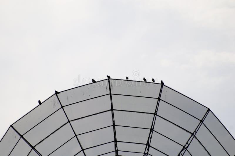 antennfågelmaträtt fotografering för bildbyråer