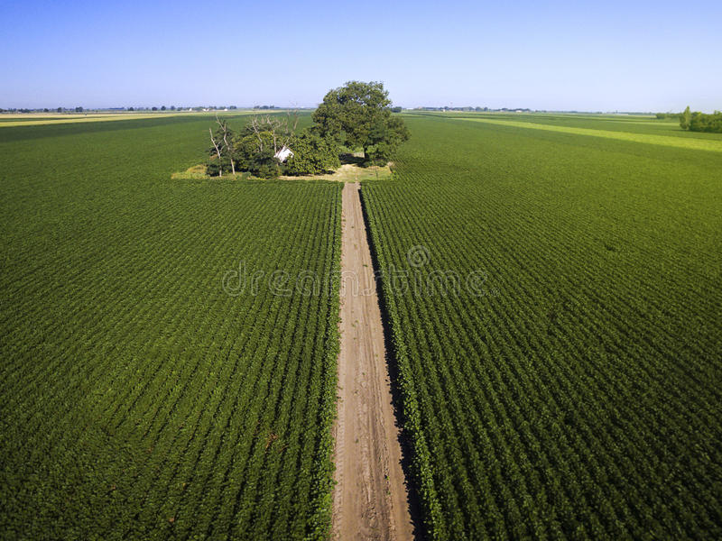 Antennskott av jordbruks- sojabönafält fotografering för bildbyråer