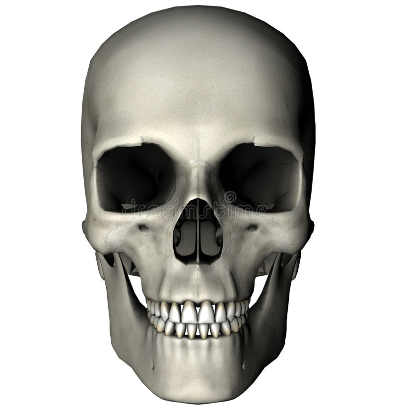 anterior mänsklig skalle stock illustrationer