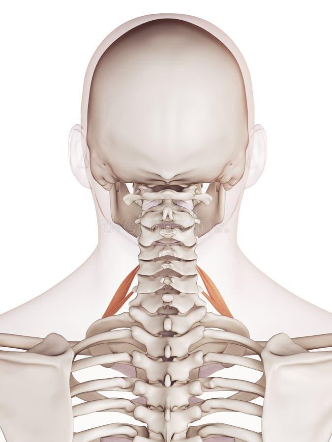 Großartig Netzfänger Interaktive 3d Anatomie Galerie - Anatomie Von ...