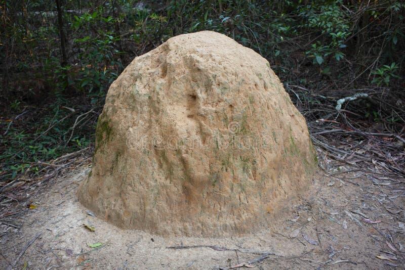 Anthill в bushland стоковое изображение