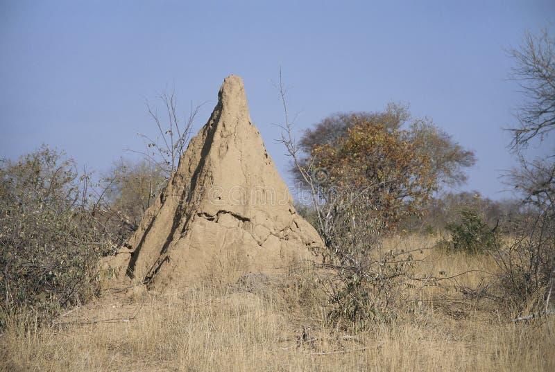 anthill огромный стоковое изображение rf