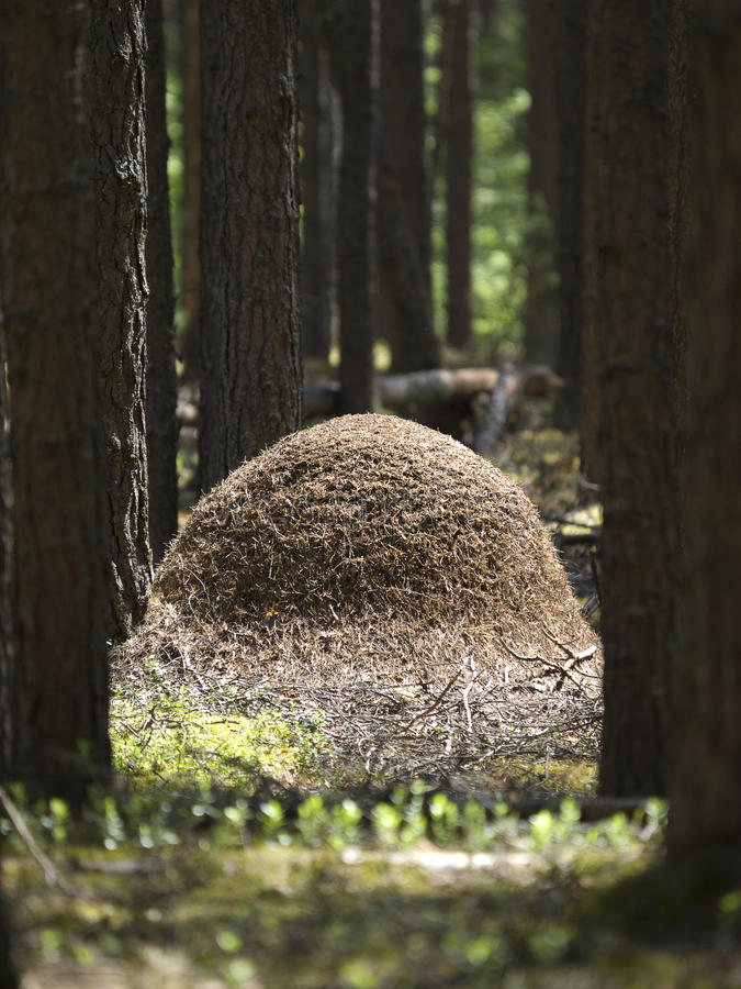 anthill стоковое фото