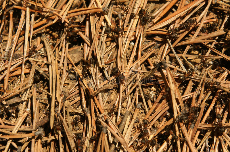 Download Anthill stock image. Image of anthill, backdrop, group - 20840013