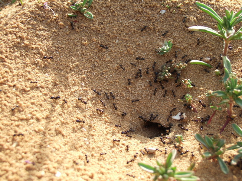 Anthill foto de stock royalty free