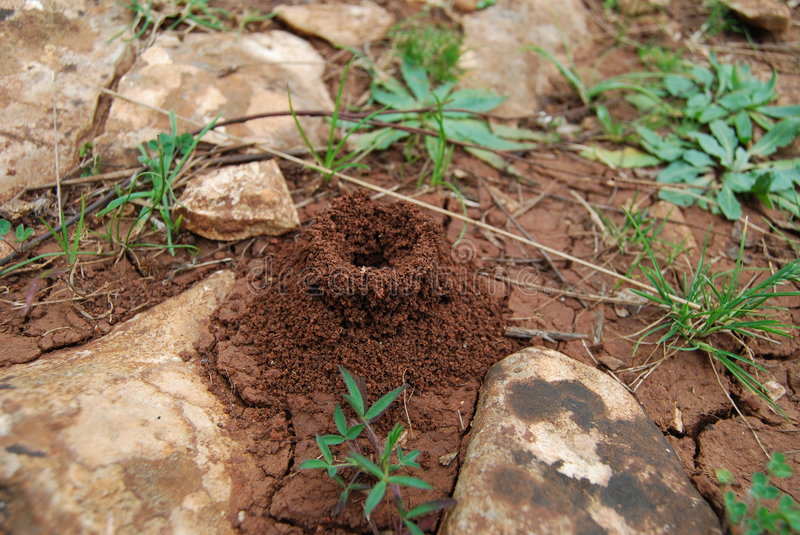Anthill, ant house stock photos