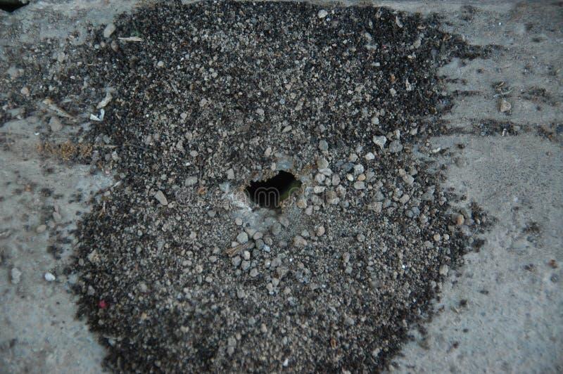 Anthill na podłogowym czarnym kolorze zdjęcia stock