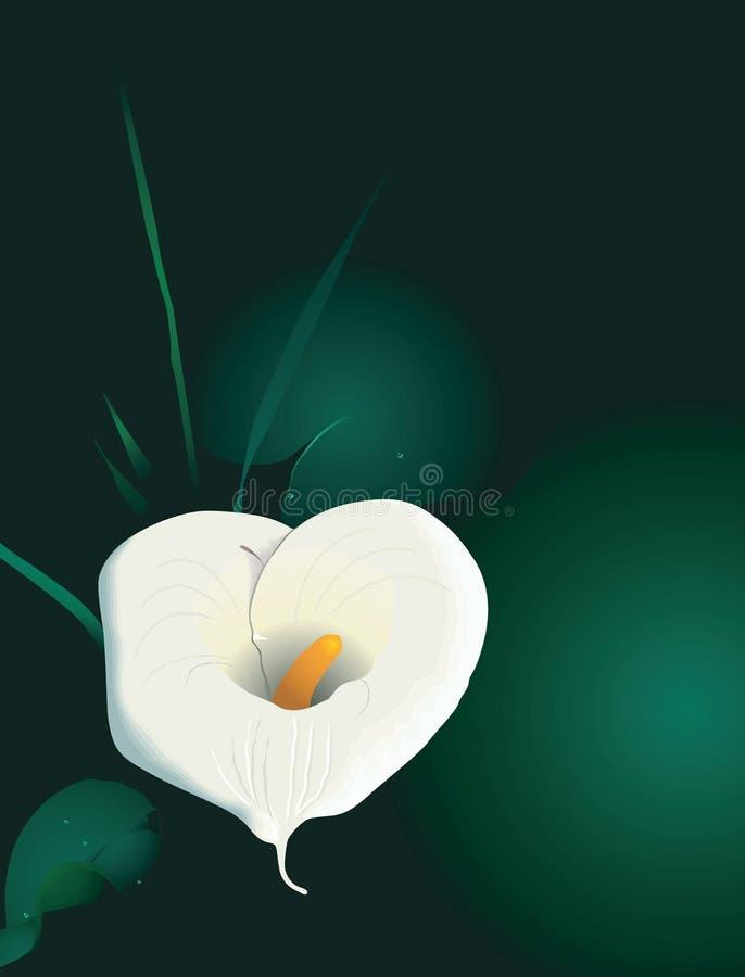 Anthodium illustration stock