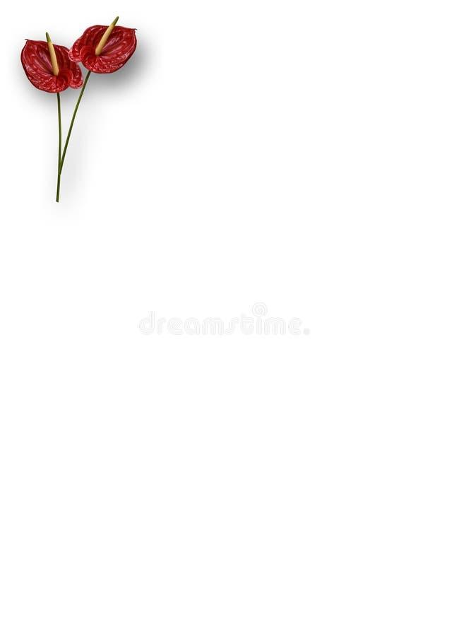 Anthurium γραφικά δύο Στοκ Φωτογραφία