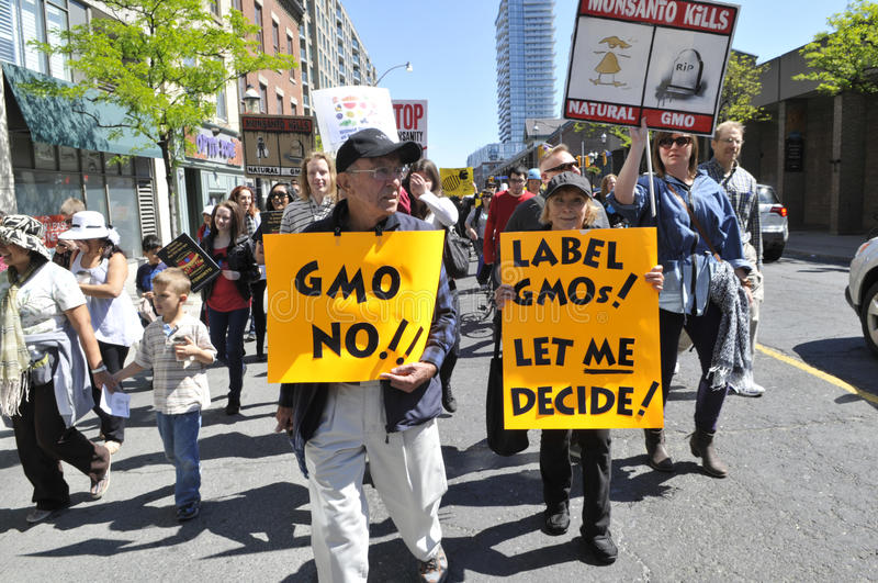 Anti GMO rally. TORONTO-MAY 25: An old couple along with other protesters walking in a rally with signs asking to label GMO's on food, against GMO giant stock photography
