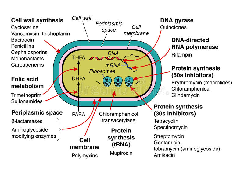 Antibiotica royalty-vrije illustratie