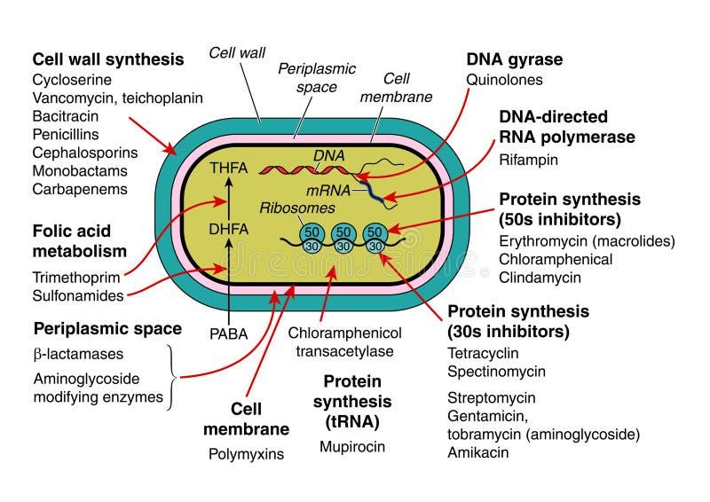 Antibiotici royalty illustrazione gratis