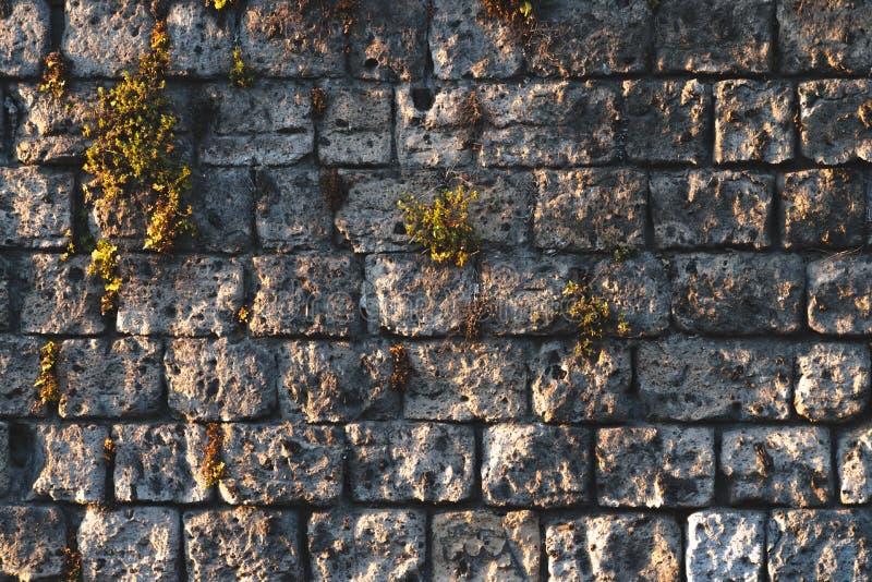 Antic Wandbeschaffenheit mit Moos und Betriebsefeu, Italien-Gebirgsstra?enkonzept stockfotos