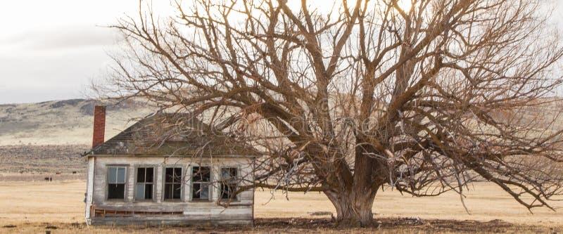 Antiek boerderijhuis naast een oude boom royalty-vrije stock afbeelding