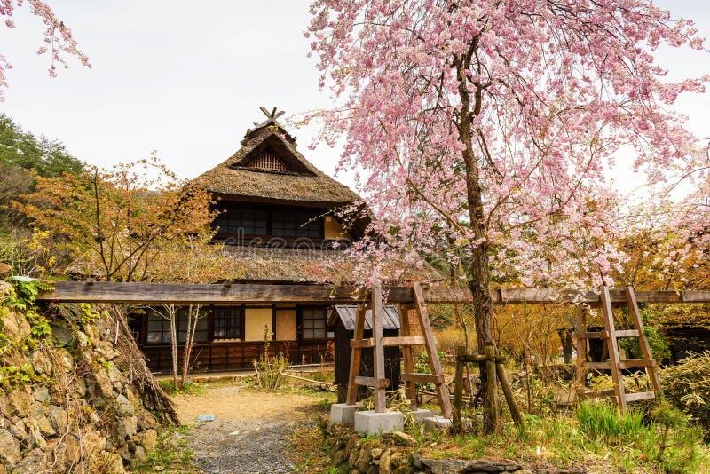 Antiek huis met sakura royalty-vrije stock foto