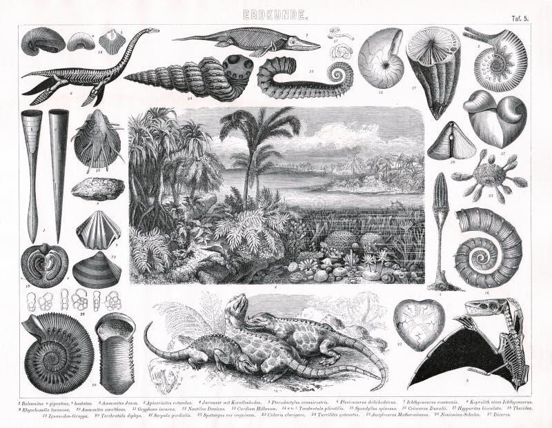 1874 antieke Druk van Jura en Uit het Cambrium de Periodeplanten en Dieren van Prheistoric