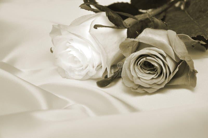 Antieke rozen stock afbeelding