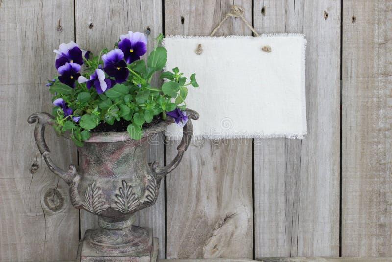 Antieke vaas met purpere bloemen (pansies) en leeg teken stock fotografie
