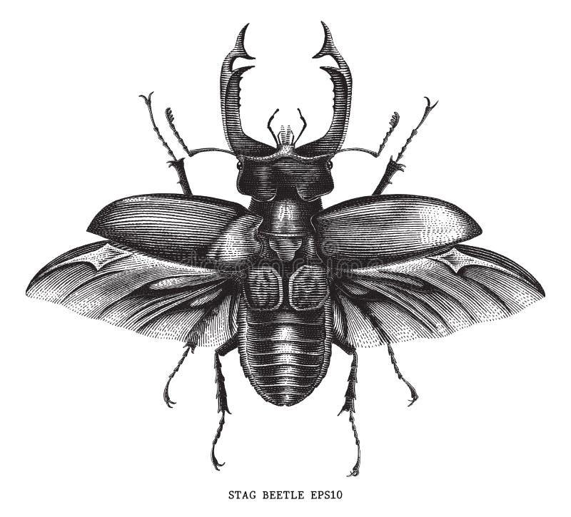 Antigüedad del ejemplo del insecto del escarabajo de macho del insecto que graba el vintage libre illustration