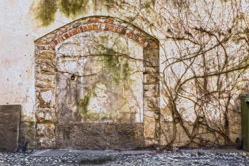 Antigua pared cubierta de hiedra seca y arco de ladrillo obsoleto. Textura de fondo foto de archivo