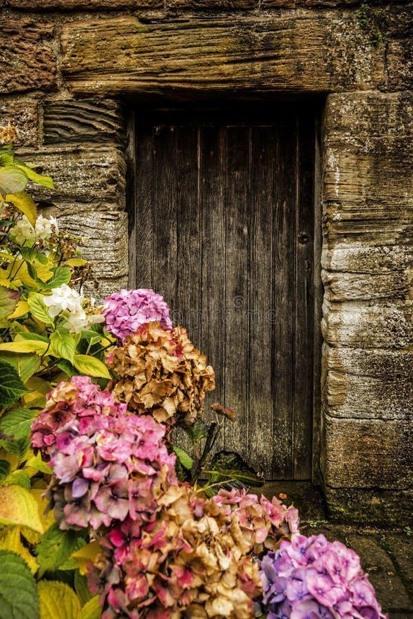 Antik trädörr och hortensia fotografering för bildbyråer
