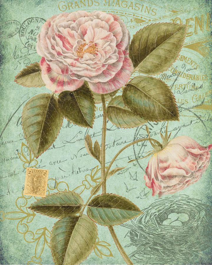 Antike botanische Collage - schäbiges Chic - rosa Rose - tadelloses Grün - französischer Poststempel und Skript Epehmera - Painte lizenzfreie abbildung