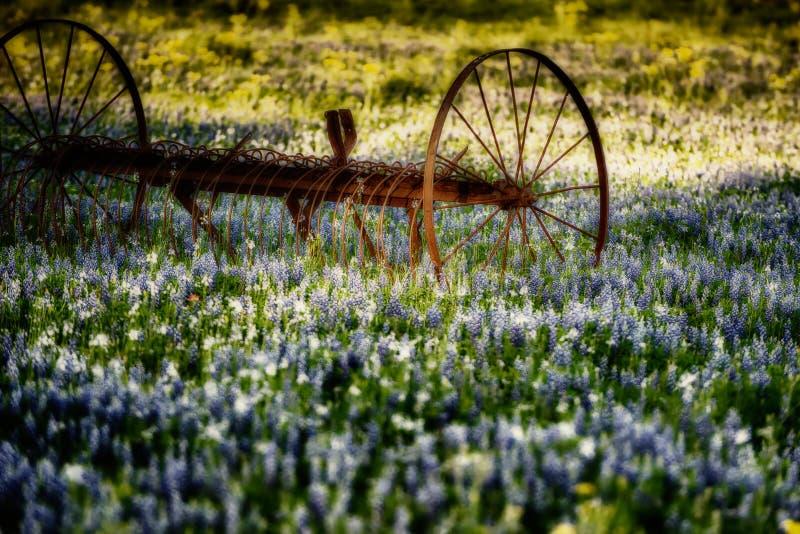 Antikt lantgårdverktyg i ett fält av Bluebonnets royaltyfri foto