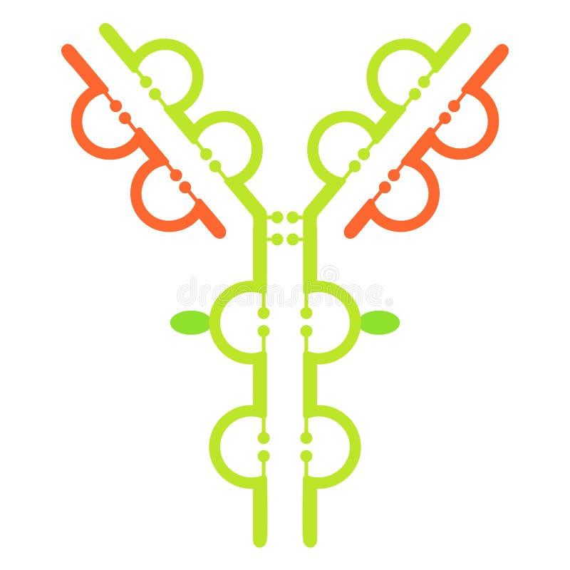 Antilichamenimmunoglobulin moleculestructuur stock illustratie