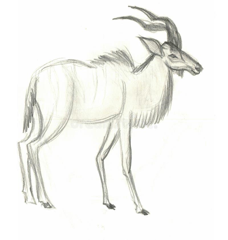 Antilope africana di Kudu disegnata a mano illustrazione di stock