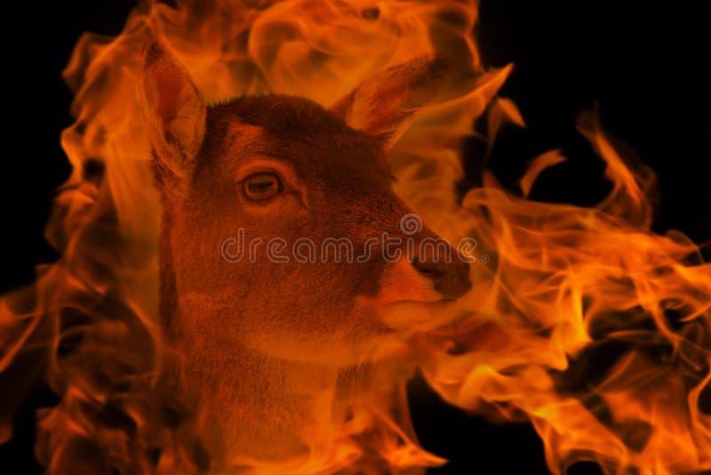 Antilope in de brand dubbele blootstelling royalty-vrije stock afbeeldingen