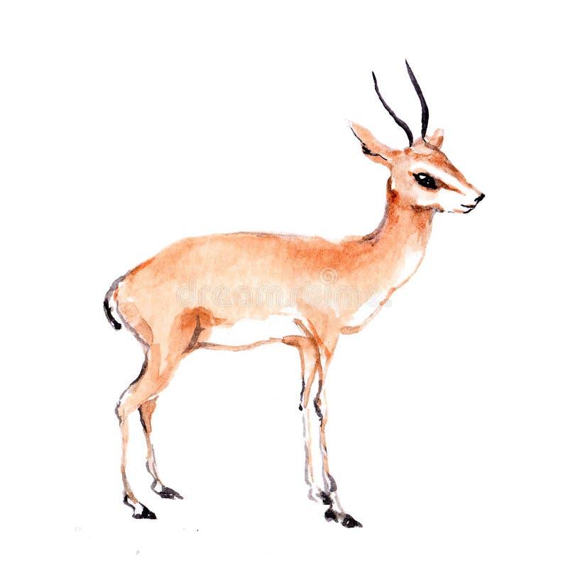 Antilopedier watercolor stock afbeelding