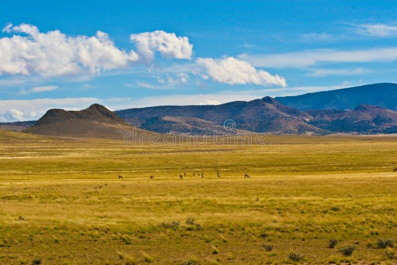 Antilopen-Feld lizenzfreie stockfotos