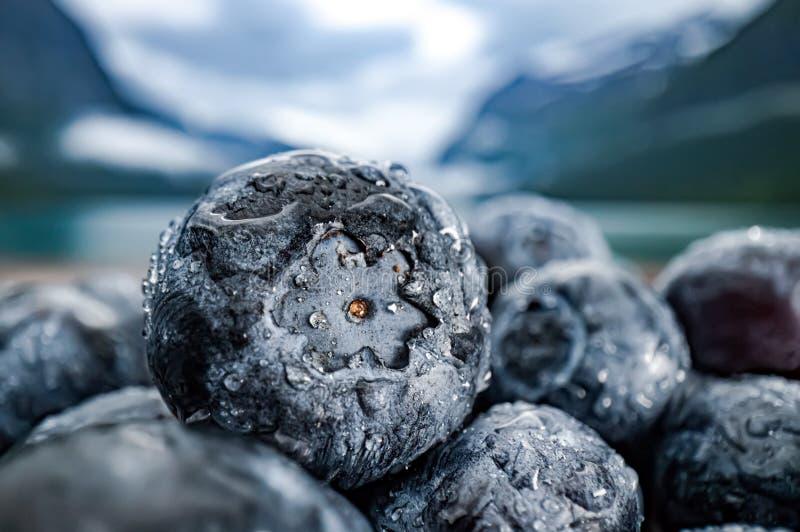 Antioxidantes del arándano en una tabla de madera en un fondo de la naturaleza noruega fotos de archivo libres de regalías