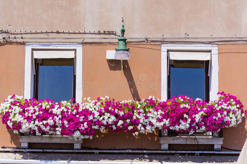 Antique building with windows with pink blooming petunia flowers in Venezia. Antique windows with pink blooming petunia flowers in Venice,Italy royalty free stock photography