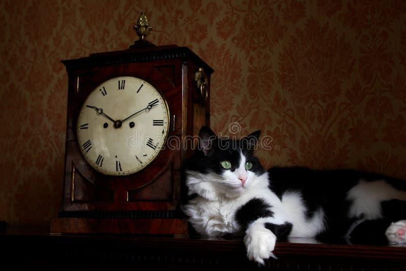 Antique clock and cat stock images