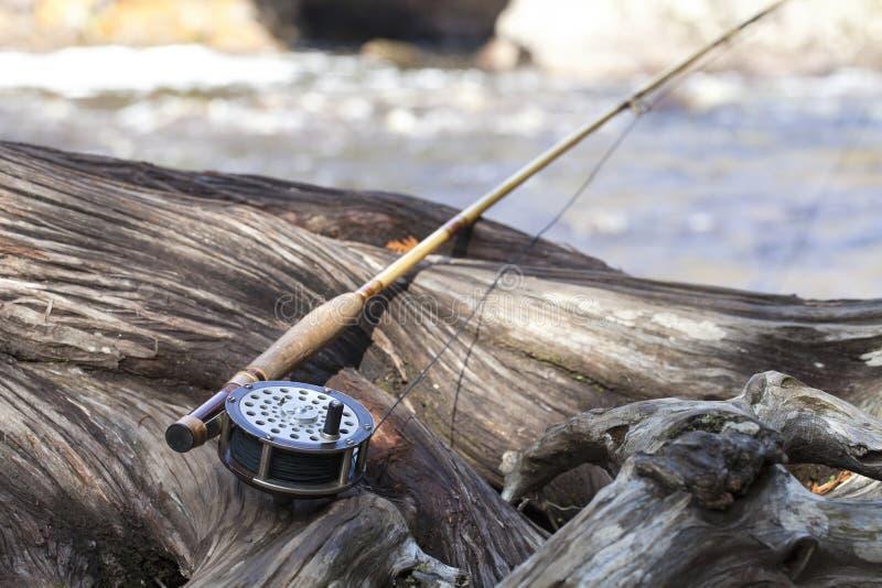 Antique fly rod and reel på ett gnagt cedar-träd nära en flod royaltyfri foto
