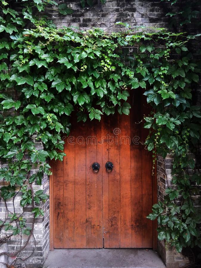 Antique gate full of vines. An antique wooden door full of vines in summer, it looks very elegant royalty free stock photos