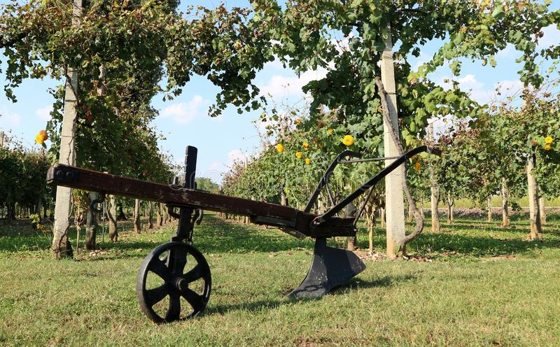 Antique plow with single wheel, in front of a vineyard in the countryside. Antique plow with a single wheel, in front of a vineyard in the countryside royalty free stock images
