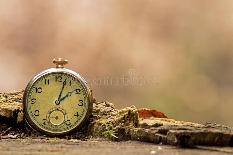 Antique Pocket Watch On Forest Stump royalty free stock image