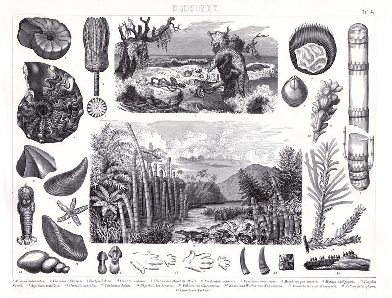 1874 Antique Print of Prheistoric Jurassic and Cambrian Period Plants and Animals vector illustration