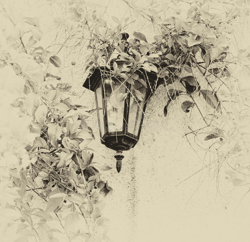 Antique Victorian Outdoor Wall Lamp surrounded by green leaves. retro old style filtered image stock photography