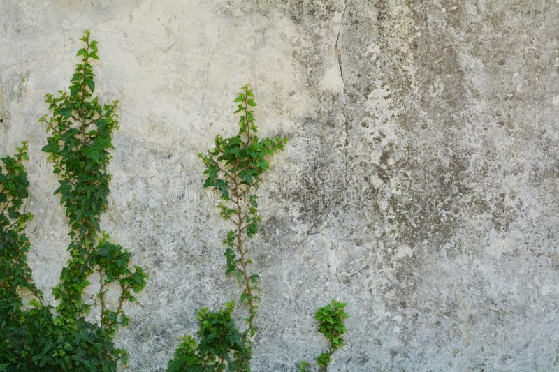 Antique wall background and plants. A decaying wall background and green plants stock photography