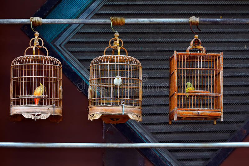 Antique wooden bird cages. Vintage bird cages with stuffed birds inside on display stock photo